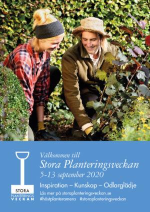 planteringsvecka simons trädgård